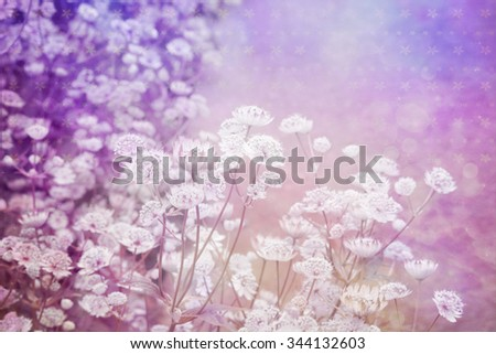 Dreamy beautiful background with meadow of flowers  - stock photo