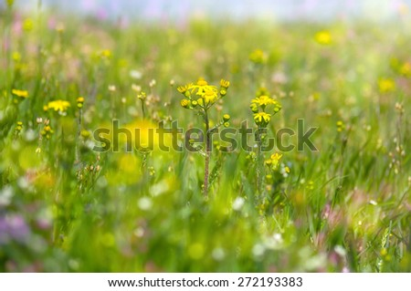 dreamy beautiful sunny field floral with flowers summer or spring background with soft blurs bokeh lights - stock photo