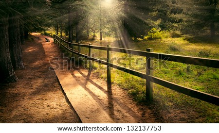 Dreamy enchanting path in the forest with a bench in the distance and welcoming beams of light shining - stock photo