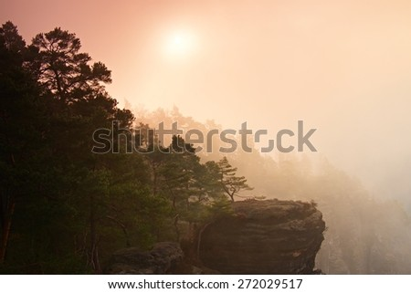 Dreamy fogy landscape, gentle orange misty sunrise in a beautiful valley of national park. Sharp peaks of trees increased from fog. - stock photo