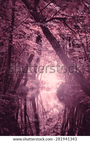 Dreamy forest. Sunshine glow through the woods and on the creek surface. Haze. Nature background. Toned photo. - stock photo