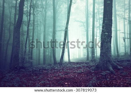 Dreamy green and blue colored foggy forest tree background. Fantasy colored woodland. Color filter effect used. - stock photo