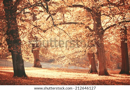Dreamy image of beautiful Autumn forest - stock photo