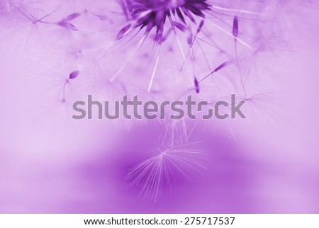 Dreamy image of dandelion seeds falling down - soft focus - stock photo