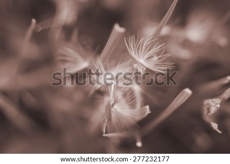Dreamy image of dandelion seeds in blades of grass - soft focus - stock photo