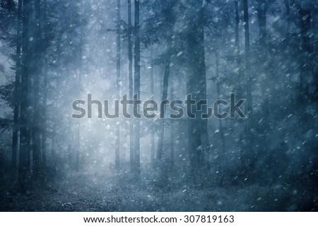 Dreamy snowfall in dark blue colored foggy forest. Beautiful winter snowy forest landscape. Heavy snowfall in magic foggy forest. - stock photo