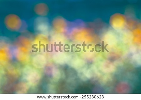 Dreamy Soft and Colorful Yellow Zinnia Flowers in a Sunny Garden. Blurred to Use as a Backdrop or Background.  Horizontal with blue sky multicolor palette of tones and hues - stock photo