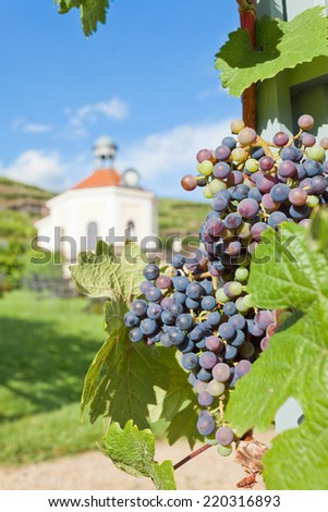 Dresden - Germany - Vine of saxony - stock photo