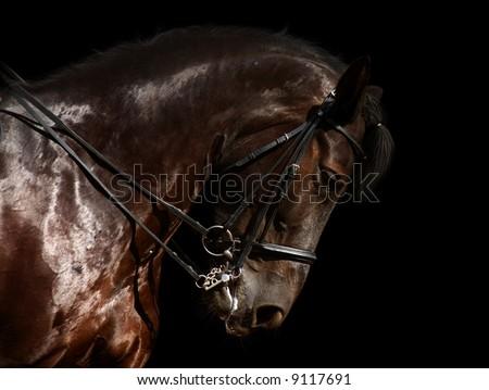 dressage, black horse - isolated on black - stock photo