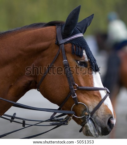 Dressage horse at local competition - stock photo