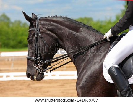 Dressage horse portrait in three day event - stock photo