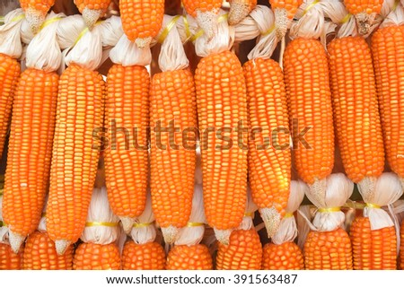 dried corn hung up outside rural house in Thailand - stock photo