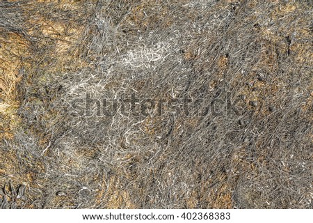 Dried dead grass texture as background image - stock photo