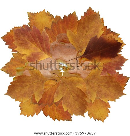 dried fall leaves of plants, flowers and branches, isolated elements on white  background for scrapbook, object, roughage autumn leaf, a piece of thin translucent crust Ikebana, herbarium - stock photo
