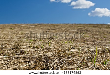 dried grass against blue sky in spring - stock photo
