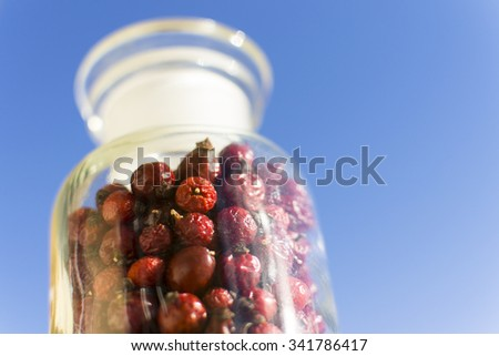 Dried hips of dog rose on blue sky background - stock photo