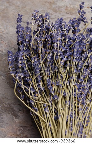 Dried Lavender Bunch - stock photo