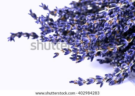 Dried lavender flowers. - stock photo
