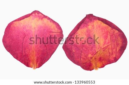 Dried red rose petals on white isolated - stock photo