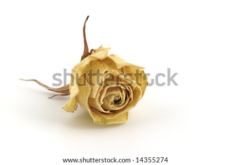 Dried rose bud on a white background - stock photo