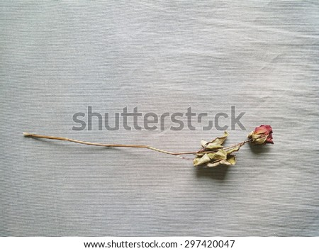 Dried rose on a bedsheet - stock photo
