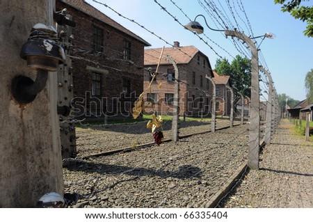 dried rose on a prison wired fence, photo taken in Auswitz, Oswiecim, Poland - stock photo