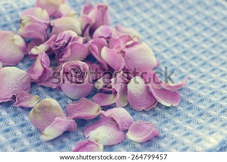 Dried roses petals on textile texture, romantic background, selective focus, filtered in retro style. - stock photo