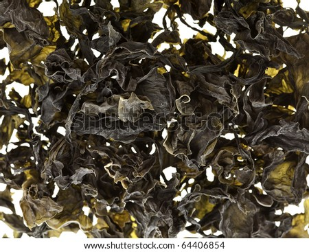 dried seaweed kelp background - stock photo