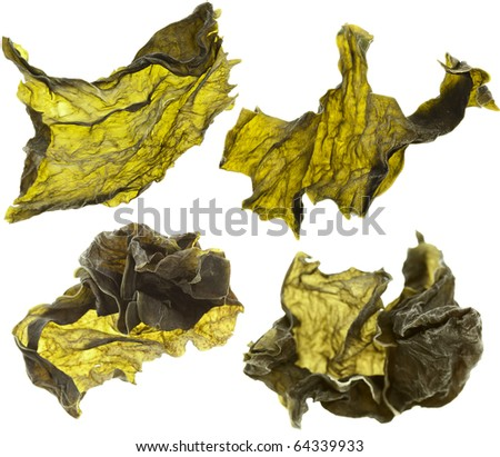 dried seaweed kelp set close up Isolated on white - stock photo