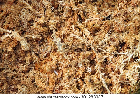 Dried sphagnum moss  - stock photo