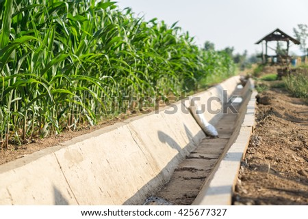 Dried water channel at drought corn field, - stock photo