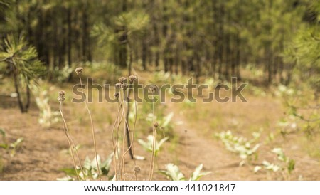 Dried Wildflowers on a Walking Trail through a Forest in Washington State - stock photo