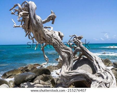 Drifitwood Views around Aruba a small caribbean Island in the Netherland Antilles - stock photo