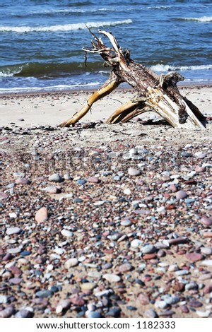 Driftwood at the beach - stock photo