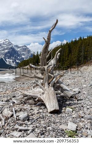 Driftwood at Upper Kananaskis Lake, Peter Lougheed Provincial Park - Kananaskis Country, Kananaskis, AB T0L, Canada - stock photo