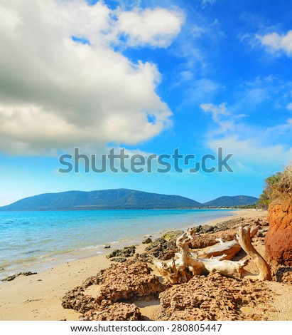 driftwood by Mugoni beach shoreline, Sardinia - stock photo