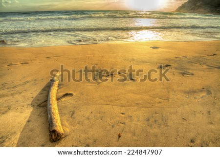 driftwood by the shore at sunset - stock photo