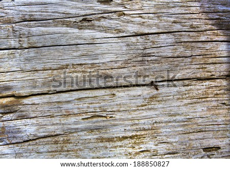 driftwood close up texture - stock photo
