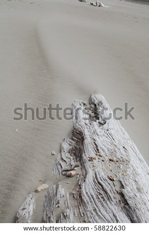 Driftwood in the Sand - stock photo