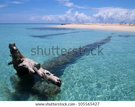 Driftwood large tree trunk in clear water near a sandy beach of a tropical island - stock photo