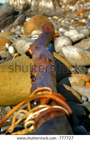 Driftwood on a beach in Northern California - stock photo