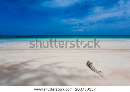 driftwood on the beach - stock photo