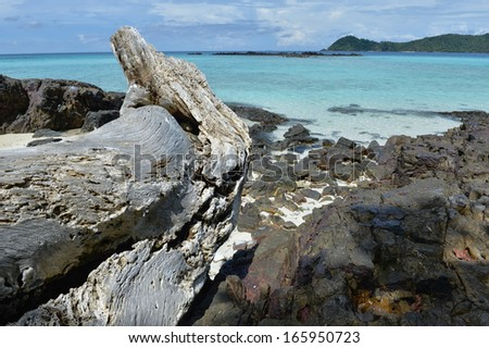 Driftwood on the rock beach - stock photo