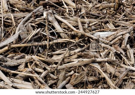 Driftwood - pattern / background  - stock photo