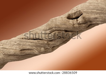 Driftwood with strong twisted grain and knots on brown background with clipping path - stock photo