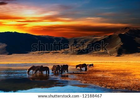 Drinking horses - stock photo