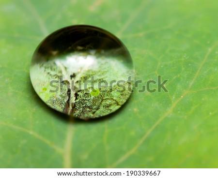 drop lens microscope - stock photo