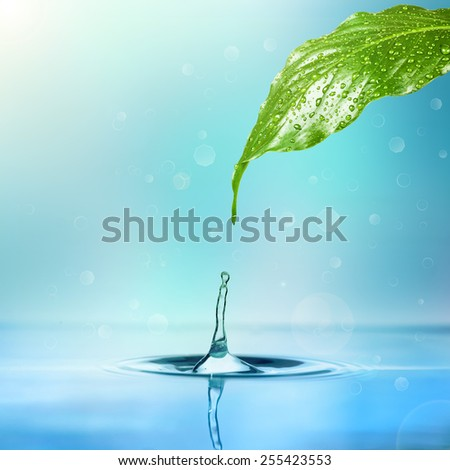 drop of rain dripping into the water from a leaf on a white background  - stock photo