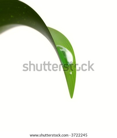 Drop on a leaf - stock photo