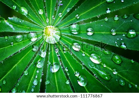 droplet of dew on a green leaf closeup shot - stock photo
